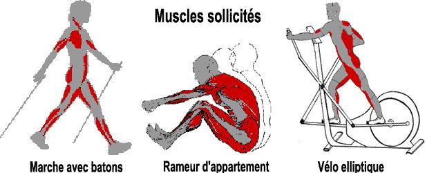Muscle velo elliptique - Muscu maison