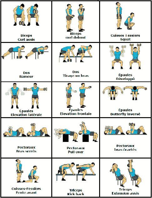 Exercice pecs haltere - Muscu maison